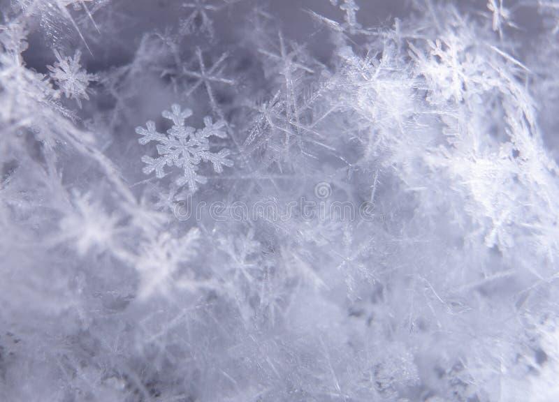 Close-up van scherpe sneeuwvlok die met andere sneeuwvlokken in bokeh wordt omringd royalty-vrije stock fotografie