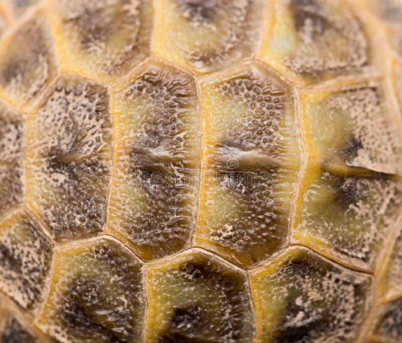 Close-up van schildpadshell royalty-vrije stock afbeelding
