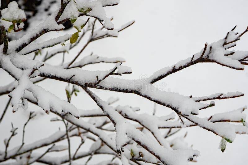 Close-up van Sneeuw Behandelde Bomentakken royalty-vrije stock afbeelding