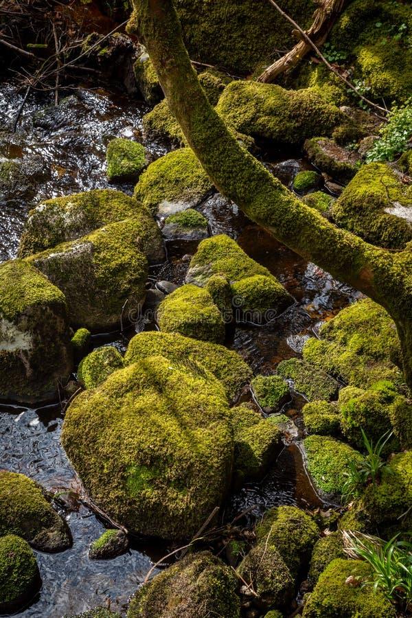 Close-up van stenen en boomboomstam door het water met groen dik nat mos wordt behandeld dat royalty-vrije stock afbeelding