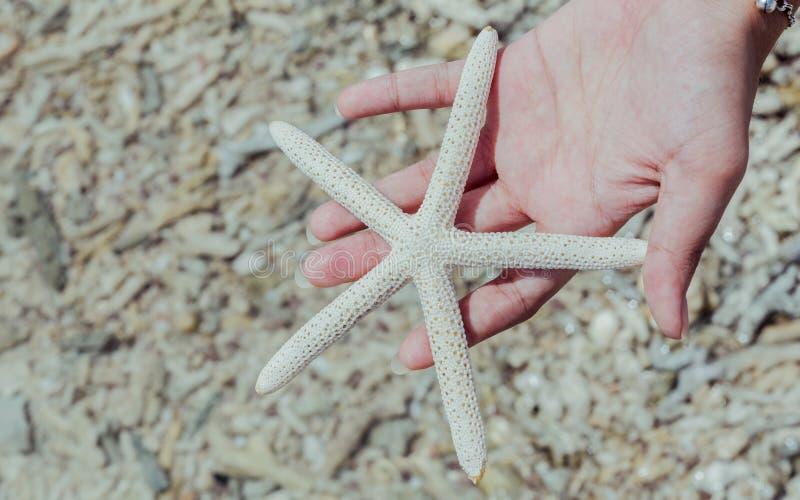 Close-up van Stervissen in meisjes 's hand bij tropisch strand Reis stock foto's