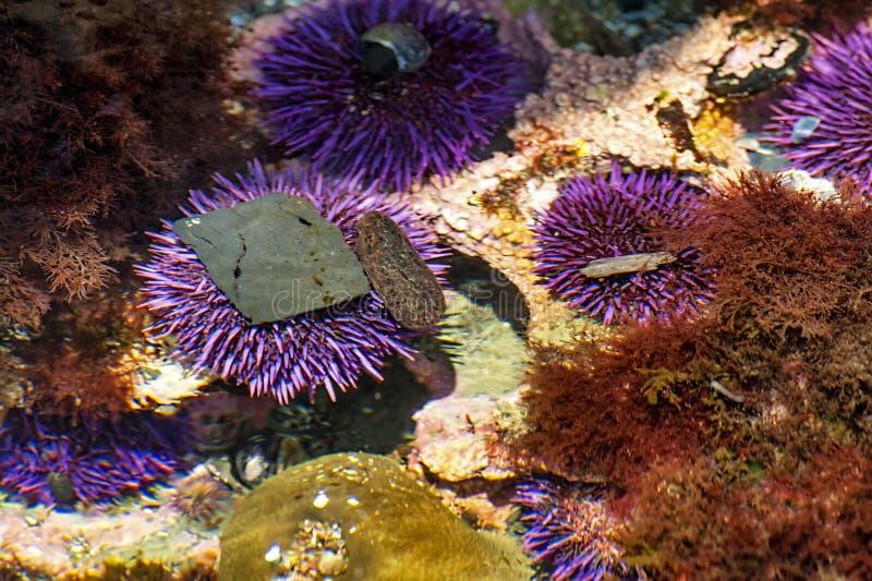 Close-up van Tidepools op de Kust van Oregon royalty-vrije stock afbeelding