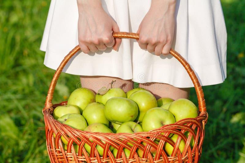 Close-up van uitstekende mand met organische appelen in de handen van de vrouw De Zomer van de tuinoogst outdoors Vrouw die een g stock fotografie