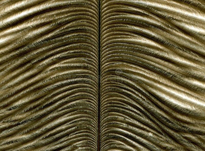Close-up van veer royalty-vrije stock fotografie