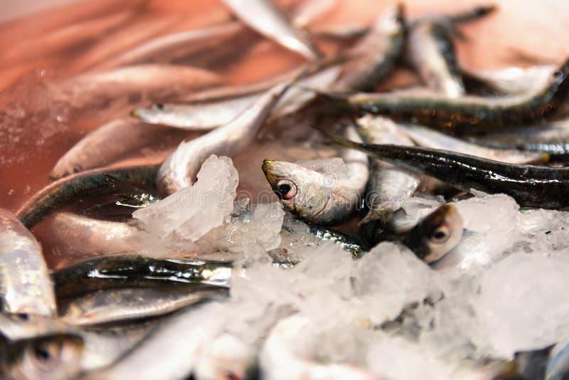 Close-up van vers Gevangen Sardines met Rood Gekleurd Ijs van Bloed in de Vissenmarkt royalty-vrije stock fotografie