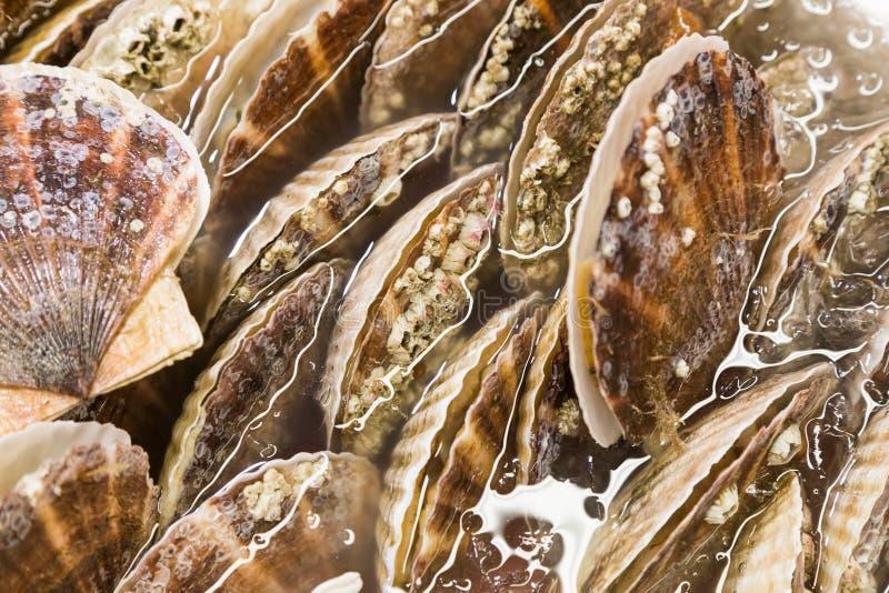Close-up van verse kammossel overzeese shell bij markt royalty-vrije stock foto