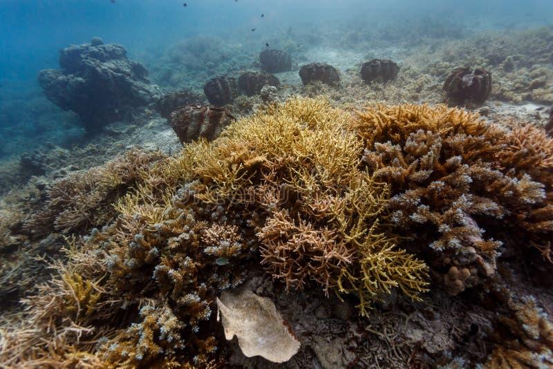 Close-up van vertakkende koraalvormingen en reuzetweekleppige schelpdieren in Palau ertsaders stock foto's
