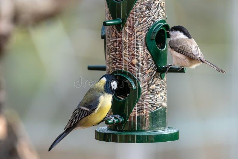 Close-up van vogels die uit een zaadvoeder eten royalty-vrije stock foto