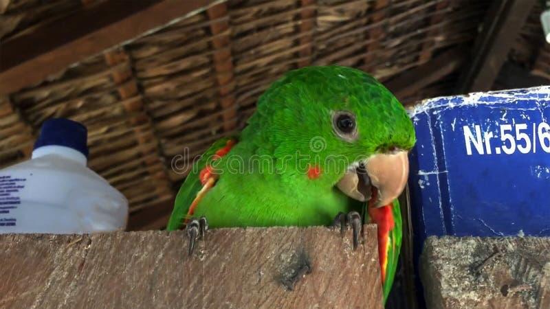 Close-up van vriendschappelijke en leuke Monnik Parakeet De groene Quaker-papegaai zit naast een doos stock foto