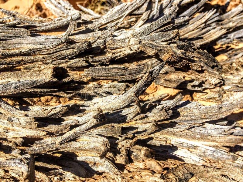 Close-up van weerhout in van de de woestijn het Hoofdertsader van Utah Nationale Park royalty-vrije stock fotografie