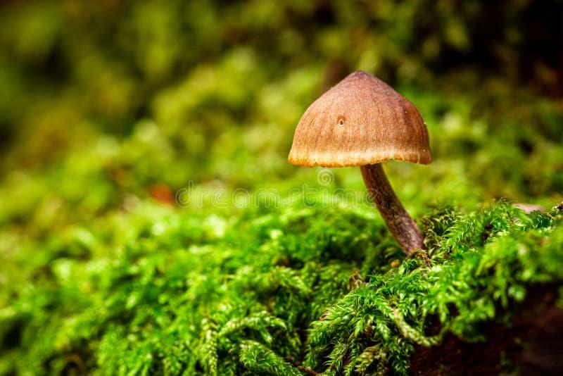 Close-up van wilde paddestoelen in het groene bos royalty-vrije stock foto's