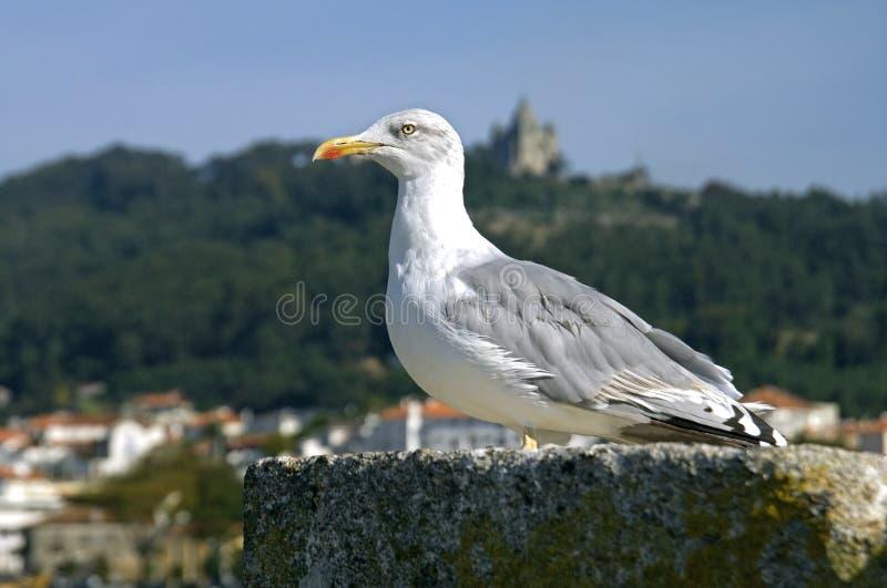 Close-up van zeemeeuw bij de haven van Castelo DE Viana stock foto