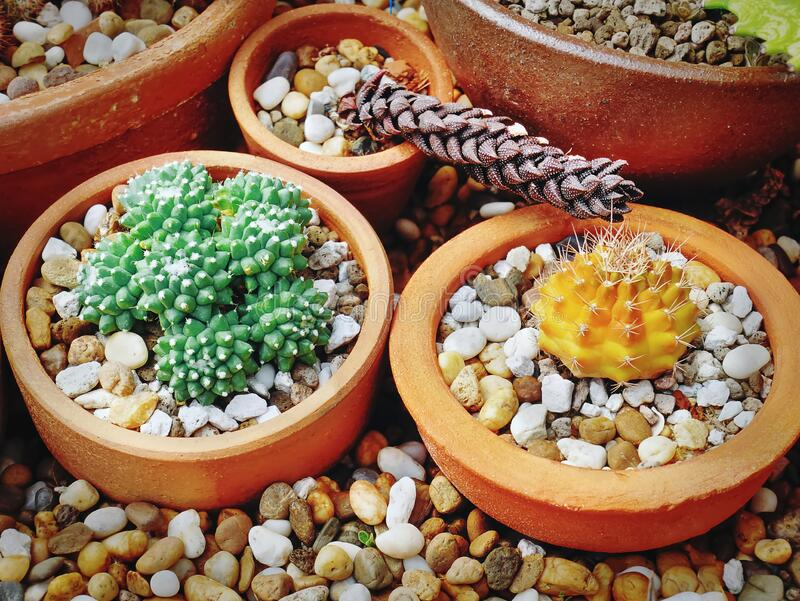 Close-up Various Kinds of Succulent Plants in Small Pots. High Angle View of Various Kinds of Succulent Plants in Small Pots stock images