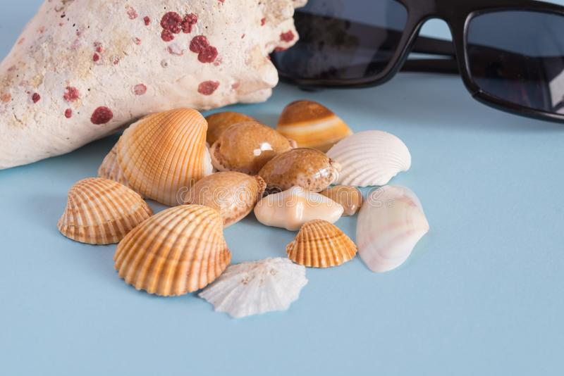 Close-up of various seashells and black glasses on a light blue. Background. . Horizontal view. Minimalist image that capture the spirit of summer stock images