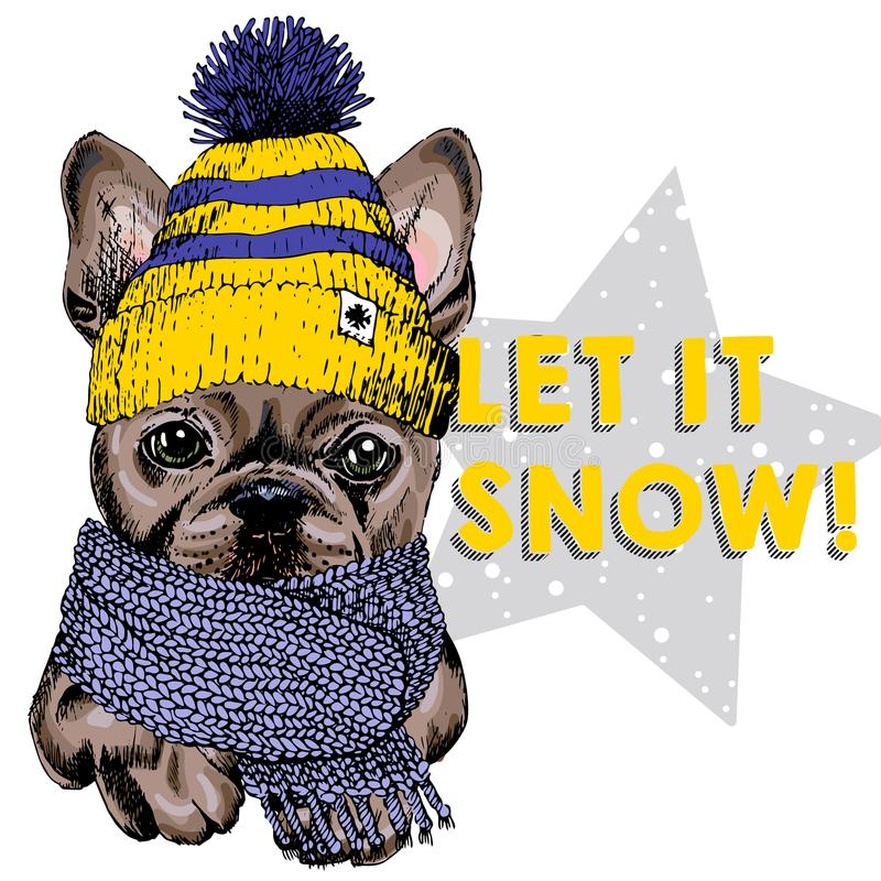Close up vector portrait of French bulldog dog wearing beanie and scarf. Ski mode mood. Skecthed colored illustraion stock illustration