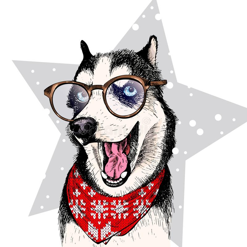 Close up vector portrait of Siberian husky dog wears winter bandana and glasses. Isolated on star. Skecthed color royalty free illustration
