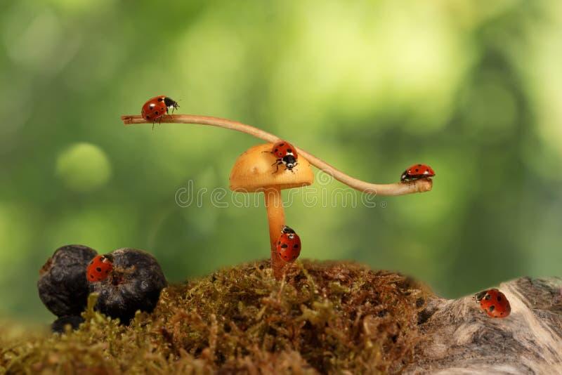 Close-up vele lieveheersbeestjes dichtbij paddestoel op groene achtergrond stock foto
