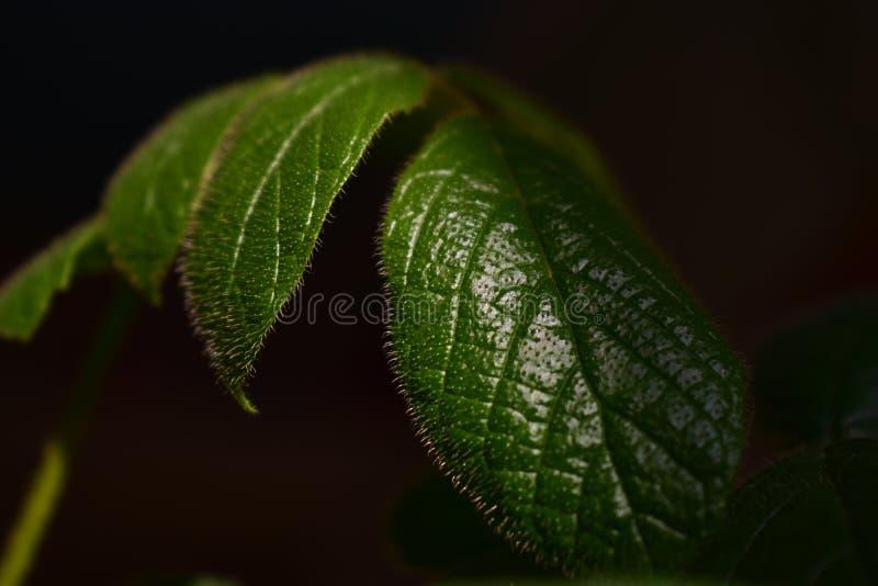 close-up verde bonito da folha de plantas em pasta imagem de stock