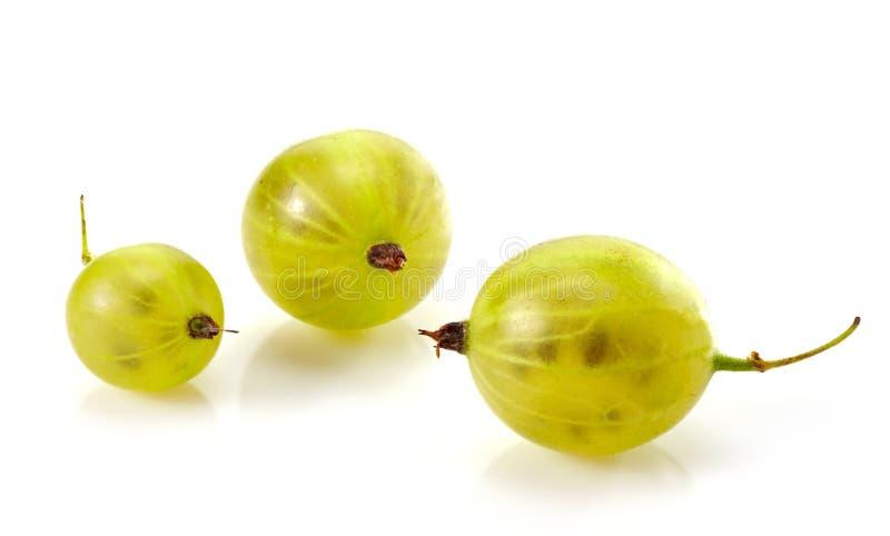 Close up verde da fruta do gooseberry fotografia de stock