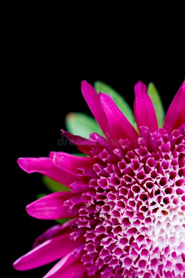 Close-up vermelho da flor fotografia de stock
