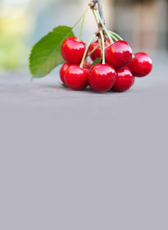 Close-up vermelho das bagas das cerejas Frutos orgânicos maduros com as folhas verdes no fundo cinzento Profundidade de campo ras imagens de stock royalty free