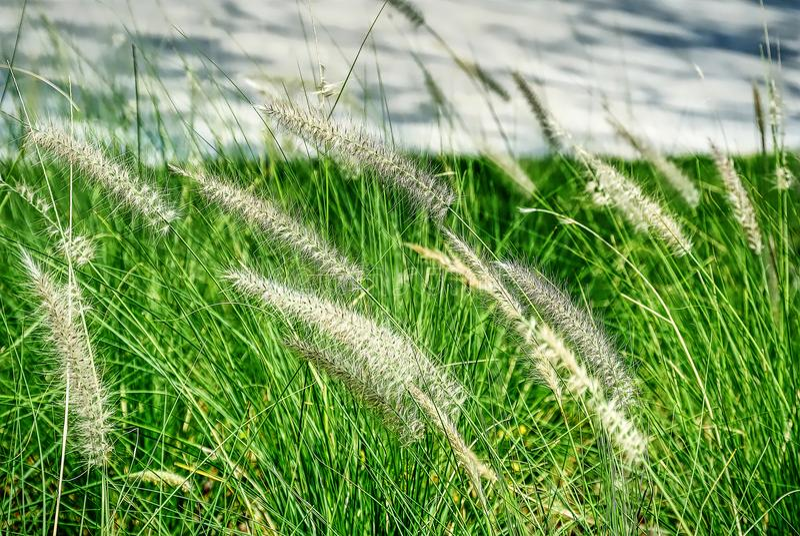 Close-up Verse Palea op het Grasgebied royalty-vrije stock afbeeldingen