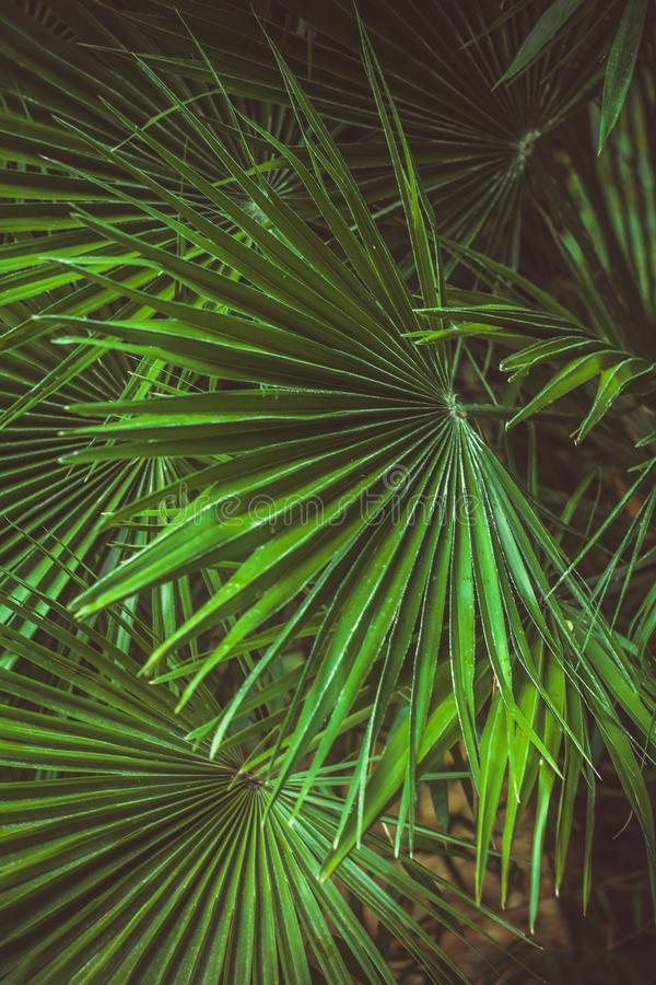 Vibrant green palm leaves pattern, summer floral abstract backdrop. Close up vibrant green palm leaves pattern, summer floral abstract backdrop stock photography