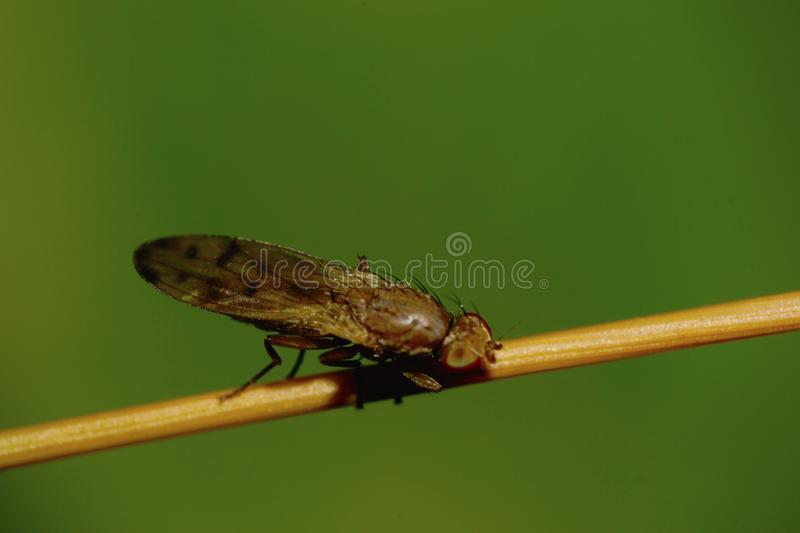 Close-up view from above spotted the small Caucasian bristly flo royalty free stock photography
