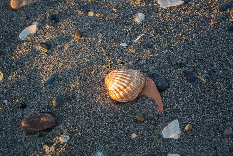 Close up view of beach in the evening with various shells, stones, sand and long shadows stock photos