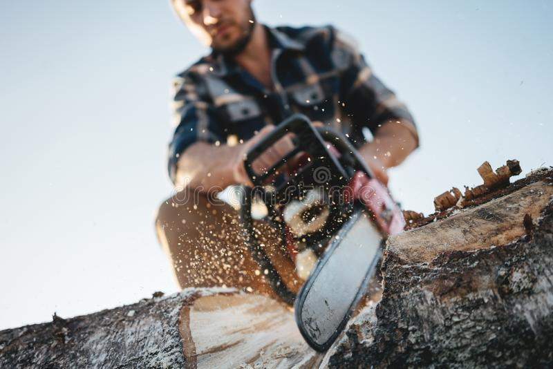 Close up view on bearded strong lumberjack wearing plaid shirt sawing tree with chainsaw for work on sawmill. Wooden chips fly apart stock image