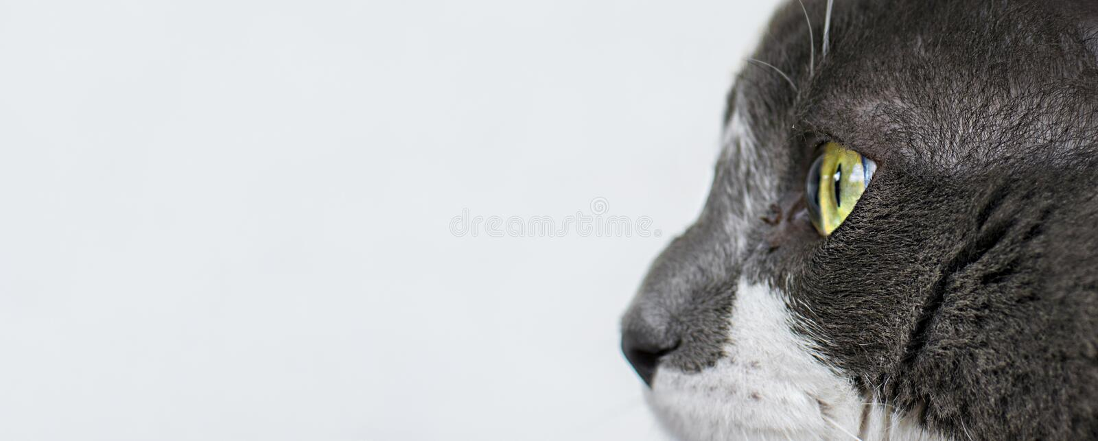 Close up view of beautiful green cat& x27;s eye. Gray and white cat on white background. Beautiful textured fur. Macro. Pets concept animal black closeup cute stock photos