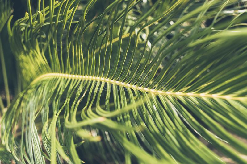 Close up view of beautiful green palm leaf royalty free stock photography