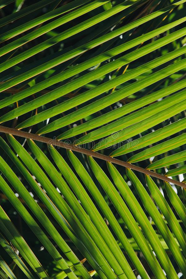 close-up view of beautiful green palm leaves at Thoddoo stock photos