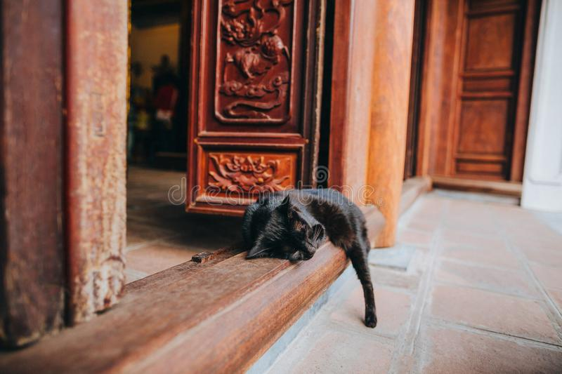 close-up view of black cat sleeping on entrance to old building stock photo
