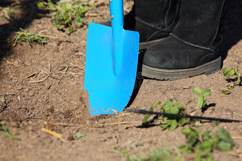 Digging Garden. Close up view of a blue and yellow shovel digging a garden in the ground royalty free stock images