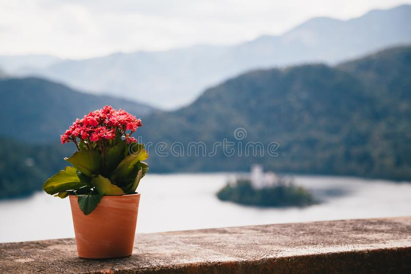 Close up view of a clay flowerpot with small pink kalanchoe flowers standing on a stone wall with the lake Bled at the. Background. Slovenia, aerial view royalty free stock image