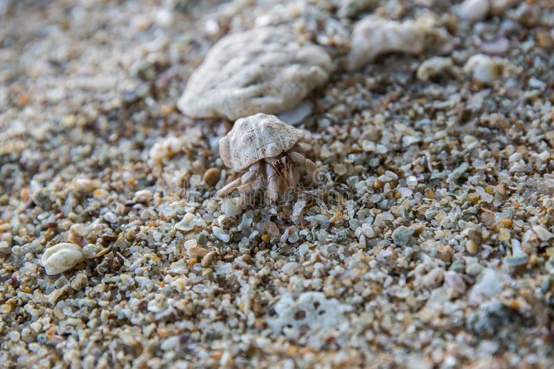 close up view of crab on rocky beach, sri stock photo