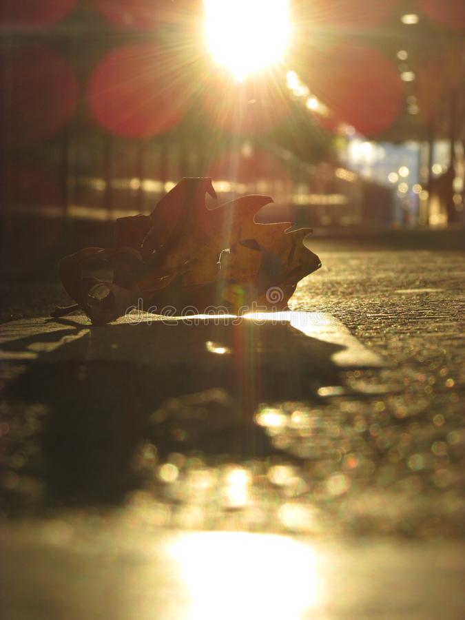 A close up view of a fallen dry leaf on a train platform royalty free stock images