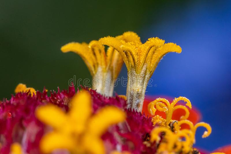 Close-up view on a flower with small yellow and purple details - macro shot.  stock images