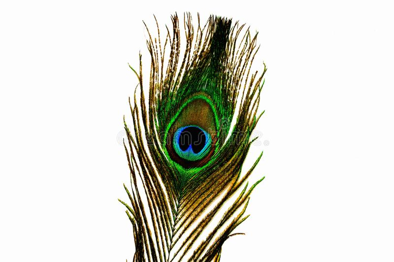 Close up view of gorgeous colorful peacock feather isolated. stock photos