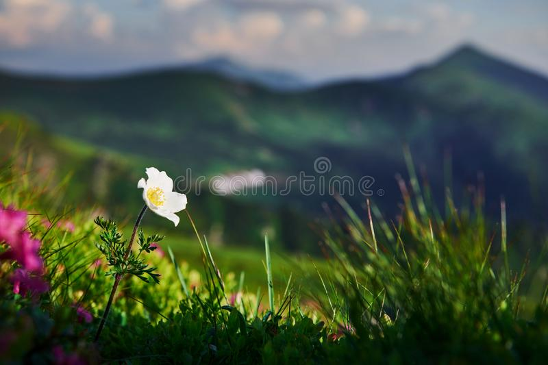 Close up view of grass at mountains at sunny day royalty free stock photos