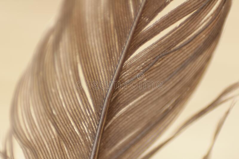 Close Up View Gray Feather Free Public Domain Cc0 Image