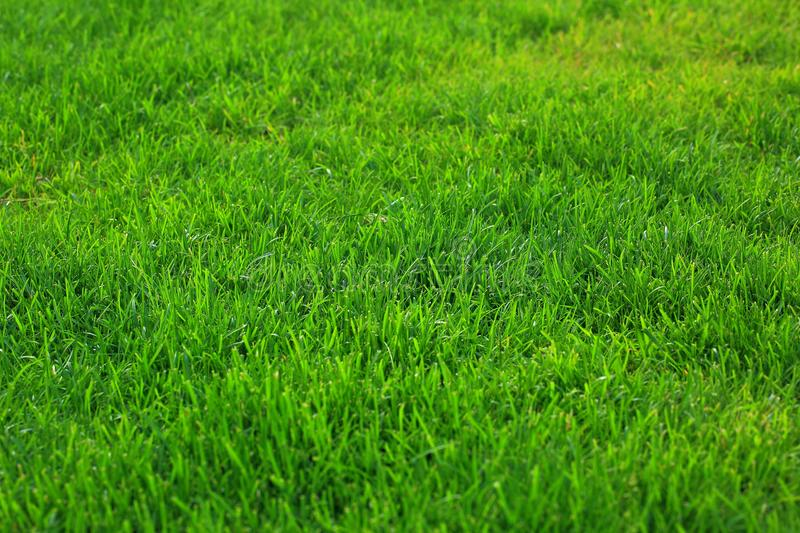 Close up view of green grass lawn. Green texture / background, Beautiful nature green background. stock image