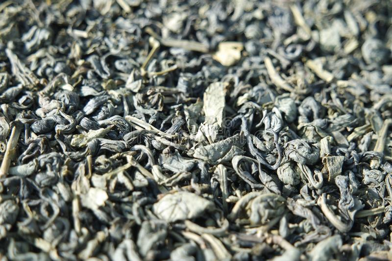 Close-up view of green tea dried leaves or stevia rebaudiana stock images