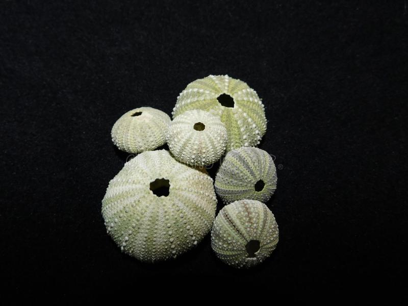 A group of Pumpkin shells stock images