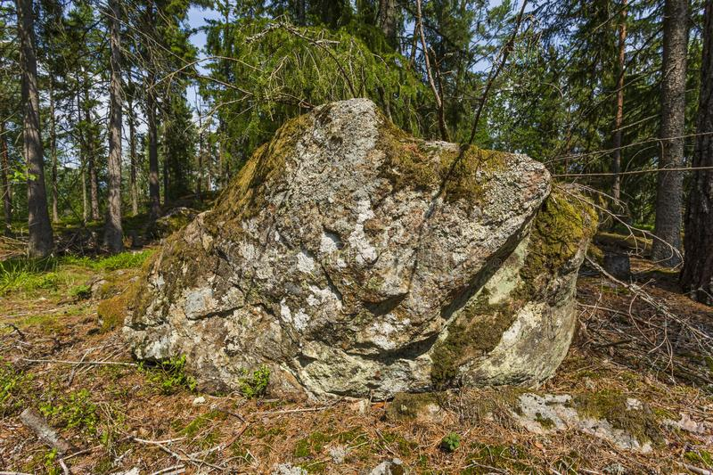 Close up view of huge rock covered with green moss on tall forest trees background stock photo