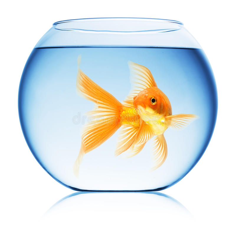 Free Close Up View Of Fish Bowl Isolated Stock Images - 11710314