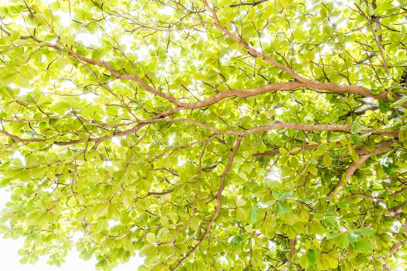 Close-up view of the old and big tree, from down to the treetop royalty free stock photography