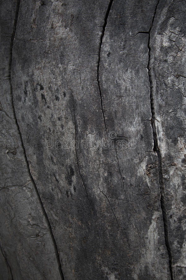 Close Up View of Old Wood Texture Background. royalty free stock images