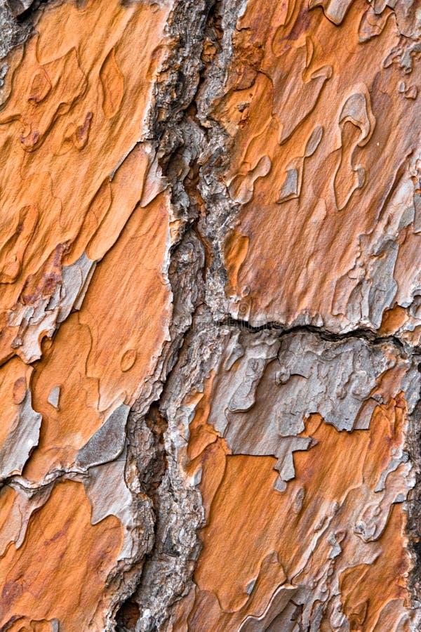 Free Close-up View On Orange Pine B Stock Images - 2319554